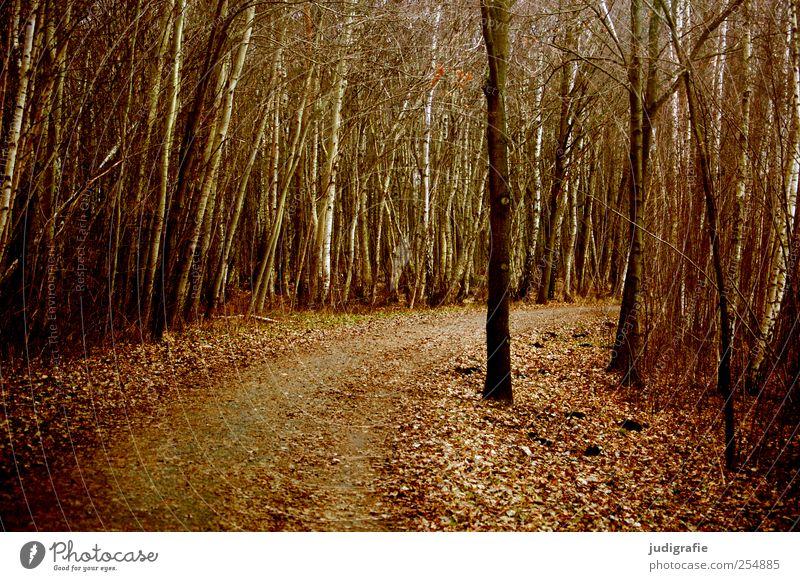 Nature Tree Plant Leaf Forest Autumn Dark Environment Landscape Lanes & trails Brown Natural Climate Curve