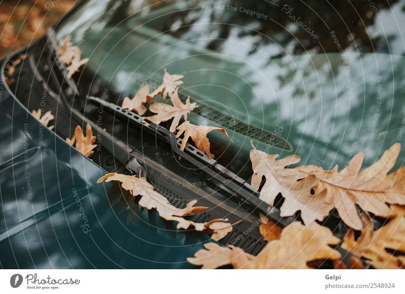 Windshield of a car full of fallen leaves in autumn Tourism Summer Garden Wallpaper Environment Nature Plant Autumn Tree Leaf Park Forest Street Highway Car