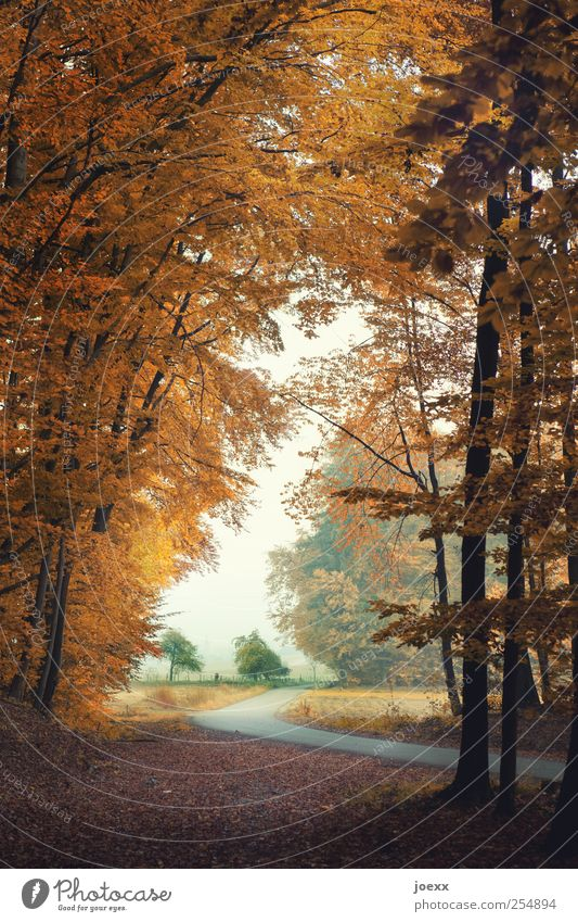 view Nature Landscape Sky Autumn Tree Field Street Brown Green White Calm Loneliness Idyll lifting mood Rural Colour photo Multicoloured Exterior shot Deserted
