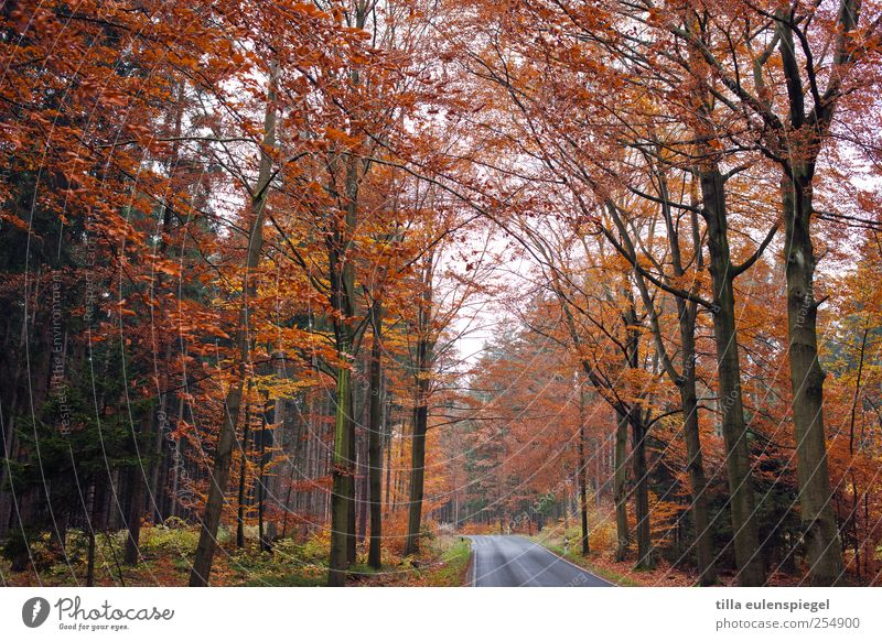Nature Tree Leaf Loneliness Forest Street Autumn Cold Orange Faded Autumnal Country road Overgrown