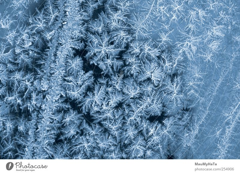 Frost Elegant Nature Elements Water Drops of water Autumn Winter Climate Bad weather Ice Snow Blossom Park Transport Car Cool (slang) Might Determination Dream