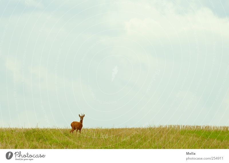 Nature Animal Meadow Environment Freedom Landscape Field Natural Wild animal Stand Roe deer