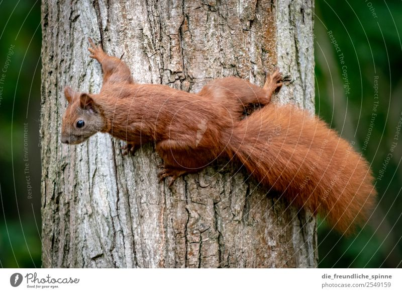 Nature Green Tree Animal Forest Brown Park Beautiful weather Bushes Cute Tree trunk Climbing Appetite Interest Rodent Nut