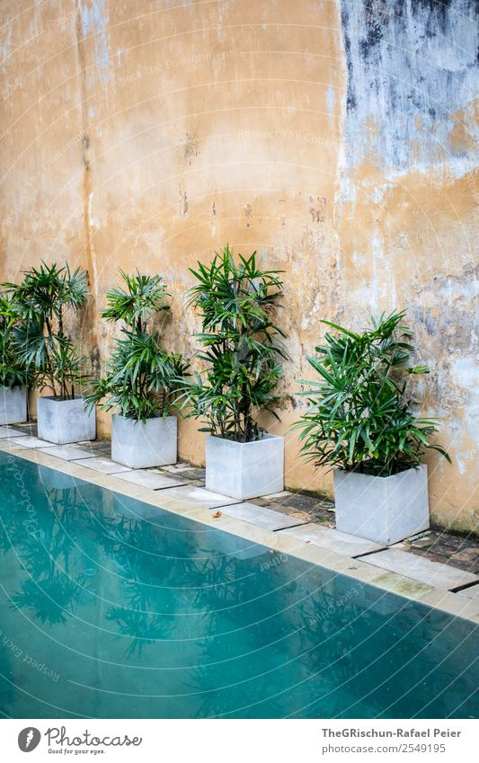 Plants at the pool Green Turquoise White Pattern Structures and shapes Background picture Wall (barrier) Swimming pool Water Wall (building) Colour photo
