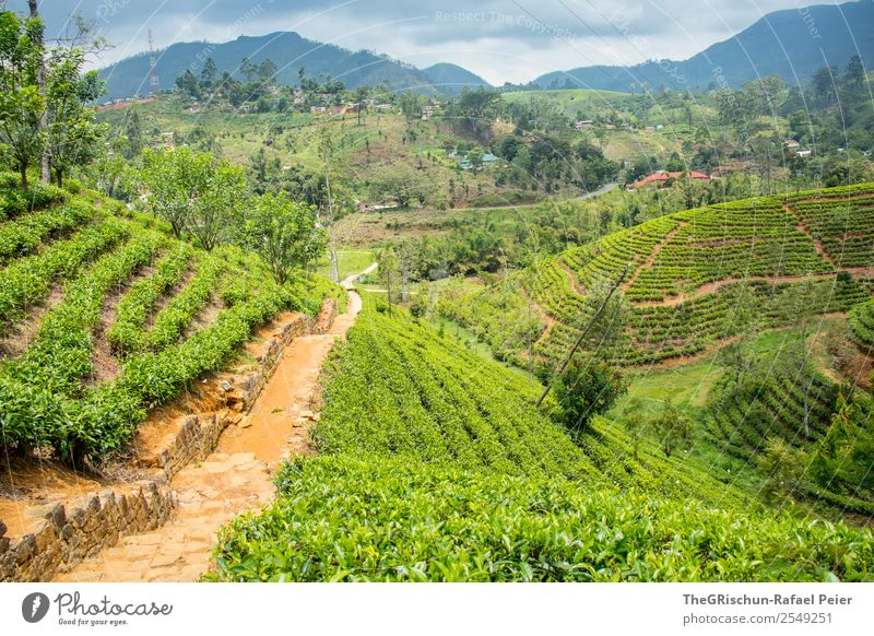 tea plantation Nature Landscape Brown Green Black hatton Sri Lanka Tea plantation Field Hill Idyll Colour photo Exterior shot Day Panorama (View) Wide angle