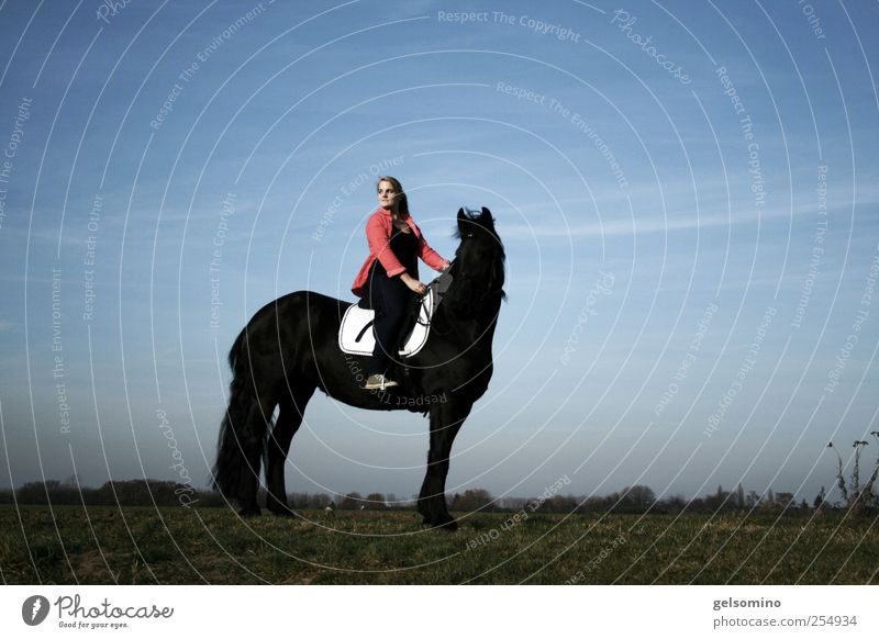Human being Sky Youth (Young adults) Blue Red Black Feminine Field Blonde Elegant Sit Free Large Esthetic Stand Horse
