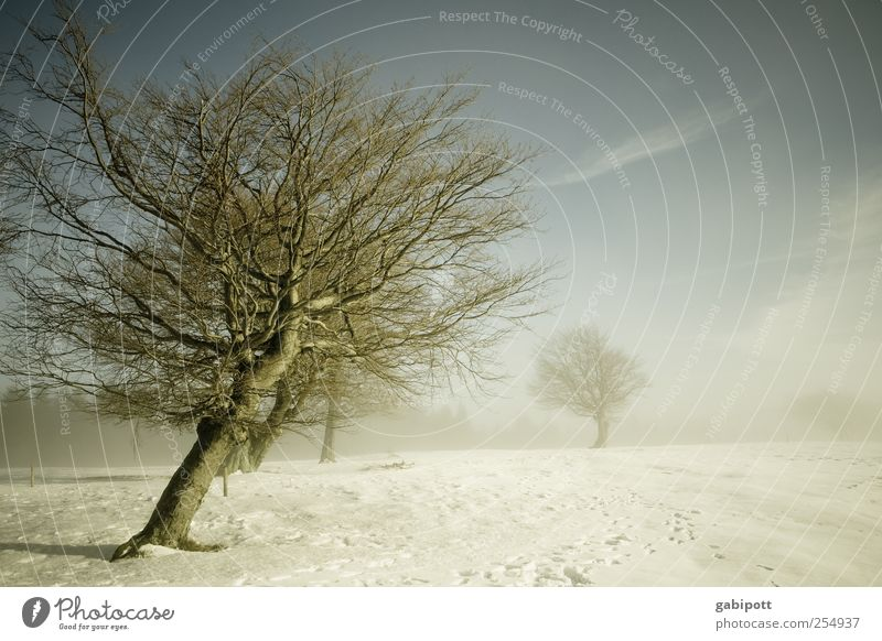 wind misalignment Winter Environment Nature Landscape Sky Weather Fog Ice Frost Snow Tree Field Cold Gloomy Blue Gray White Longing Apocalyptic sentiment