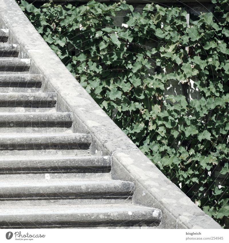 Green Plant Leaf Gray Garden Stone Park Concrete Stairs Growth Change Converse Foliage plant Advancement