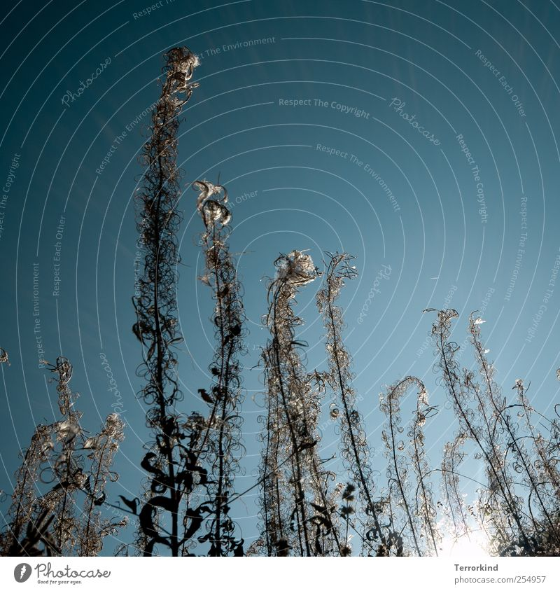 Sky Nature Blue Plant Far-off places Tall Large Perspective Turquoise Muddled Spiral Ant Cloudless sky Jinxed Effortless