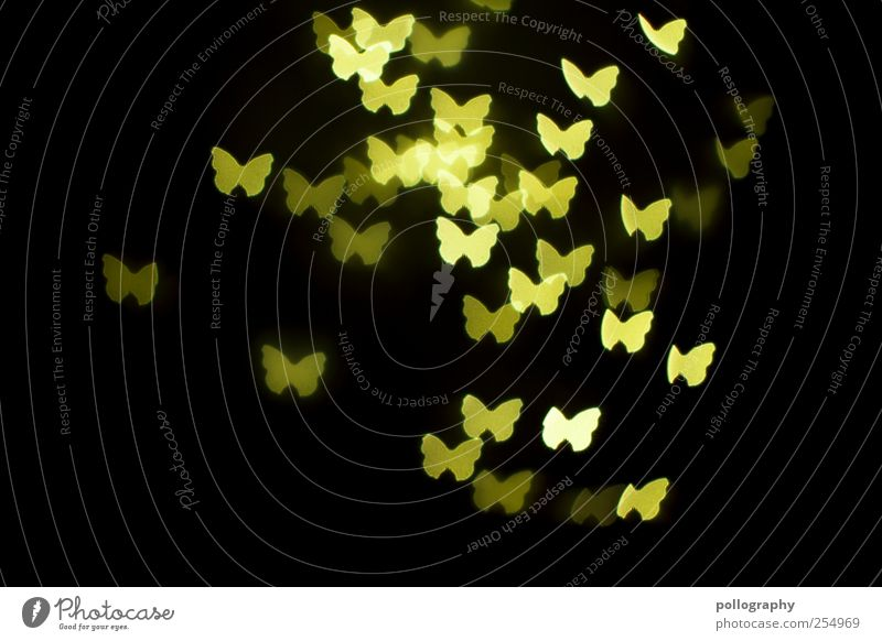 night owls Night life Feasts & Celebrations Animal Butterfly Group of animals Flock Animal family Flying Illuminate Together Yellow Green Happy