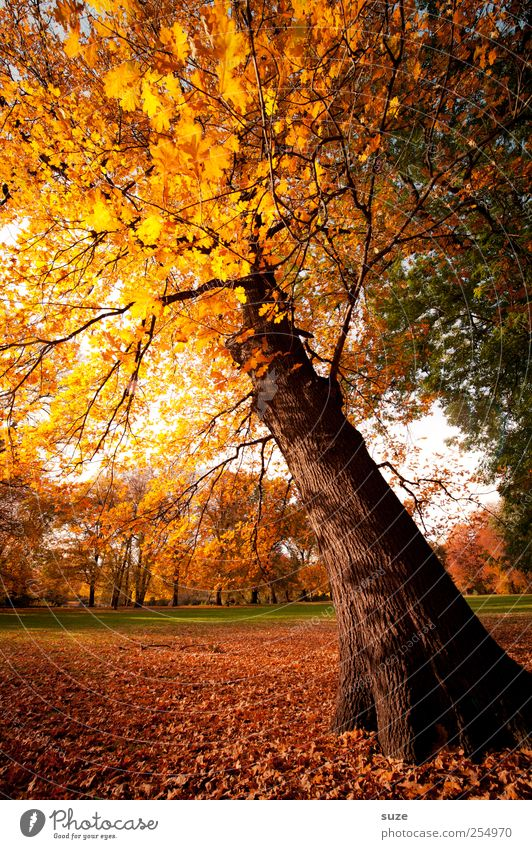 Sky Nature Beautiful Tree Yellow Autumn Meadow Environment Landscape Park Weather Gold Climate Beautiful weather Treetop Autumn leaves