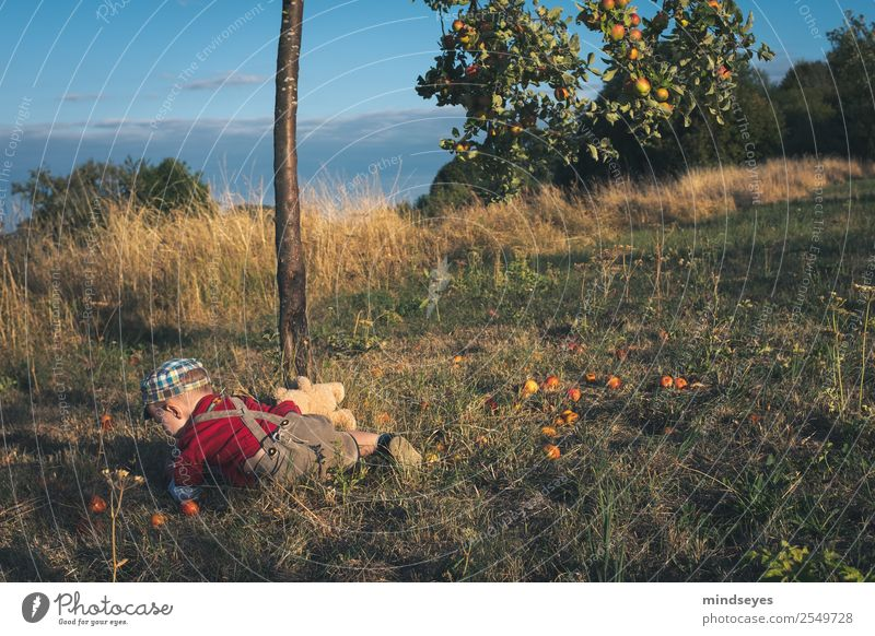 Human being Nature Plant Joy Healthy Natural Boy (child) Garden Playing Infancy Idyll Happiness Adventure Curiosity To fall Apple