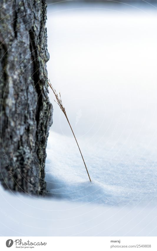 In need of support Nature Winter Ice Frost Snow Tree Grass Freeze Together Cold Natural Lean Intimacy Near Tree bark Dry Colour photo Subdued colour