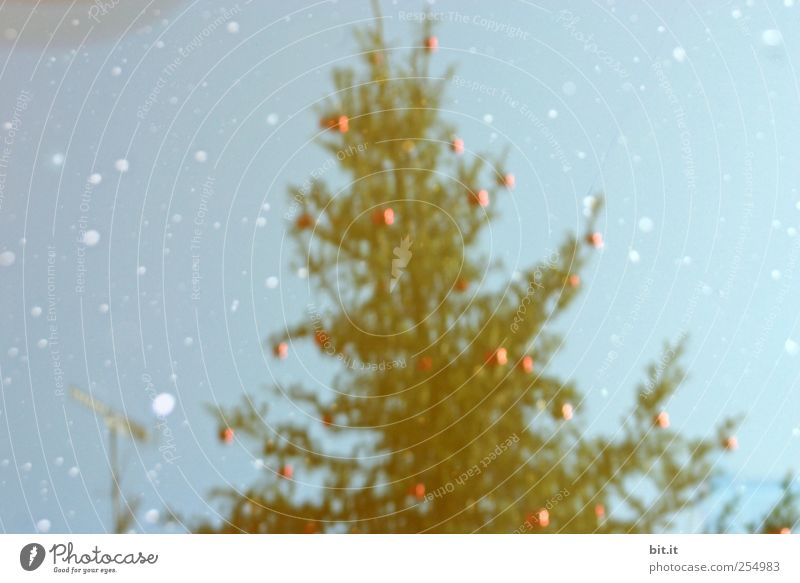 Sky Blue Christmas & Advent Red Environment Snow Snowfall Ice Feasts & Celebrations Climate Glittering Decoration Frost Fantastic Christmas tree Sphere