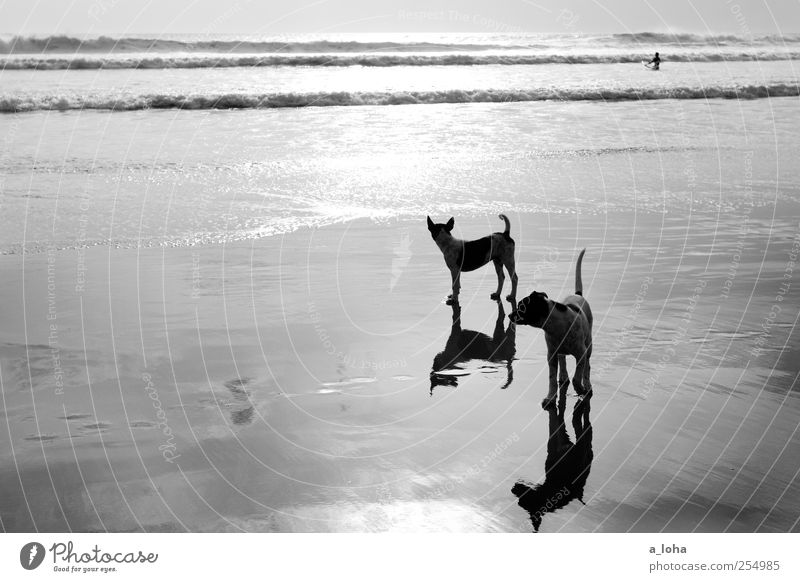 Stray II Vacation & Travel Summer Nature Sand Water Sunrise Sunset Beautiful weather Waves Coast Beach Ocean Animal Dog 2 Pack Baby animal Observe Wait