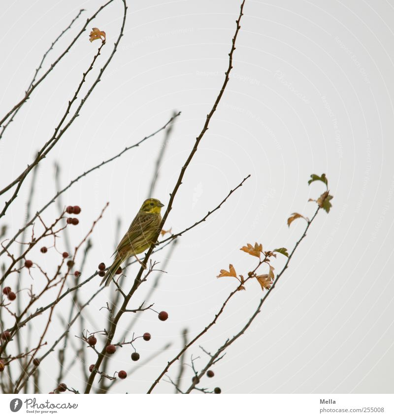 Nature Tree Plant Winter Animal Autumn Environment Gray Small Bird Sit Natural Gloomy Bushes Cute Branch