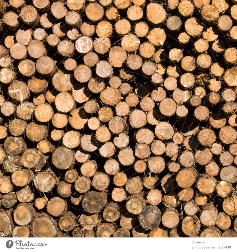 Environment Wood Arrangement Tree trunk Many Stack Climate change Forestry Supply Firewood Ignite Logging Profession Woodcutter Stack of wood Annual ring