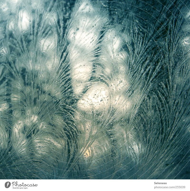 frost work Winter Environment Nature Landscape Ice Frost Glass Line Freeze Cold Near Frostwork Colour photo Close-up Detail Macro (Extreme close-up) Abstract