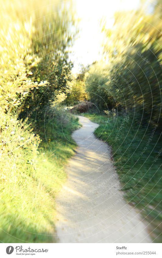 Nature Sun Leaf Grass Movement Lanes & trails Walking Beautiful weather Speed Bushes Target Footpath Haste Dynamics October Jogging