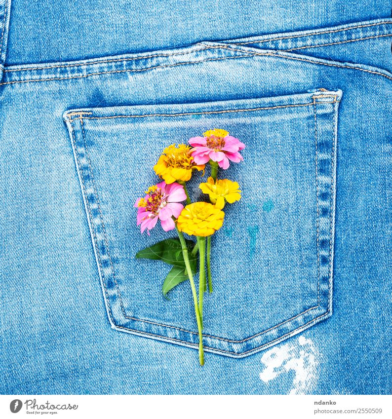 flowers on the back pocket Style Flower Fashion Clothing Jeans Blossoming Blue Yellow Colour Tradition Denim Consistency background casual textile Seam Material