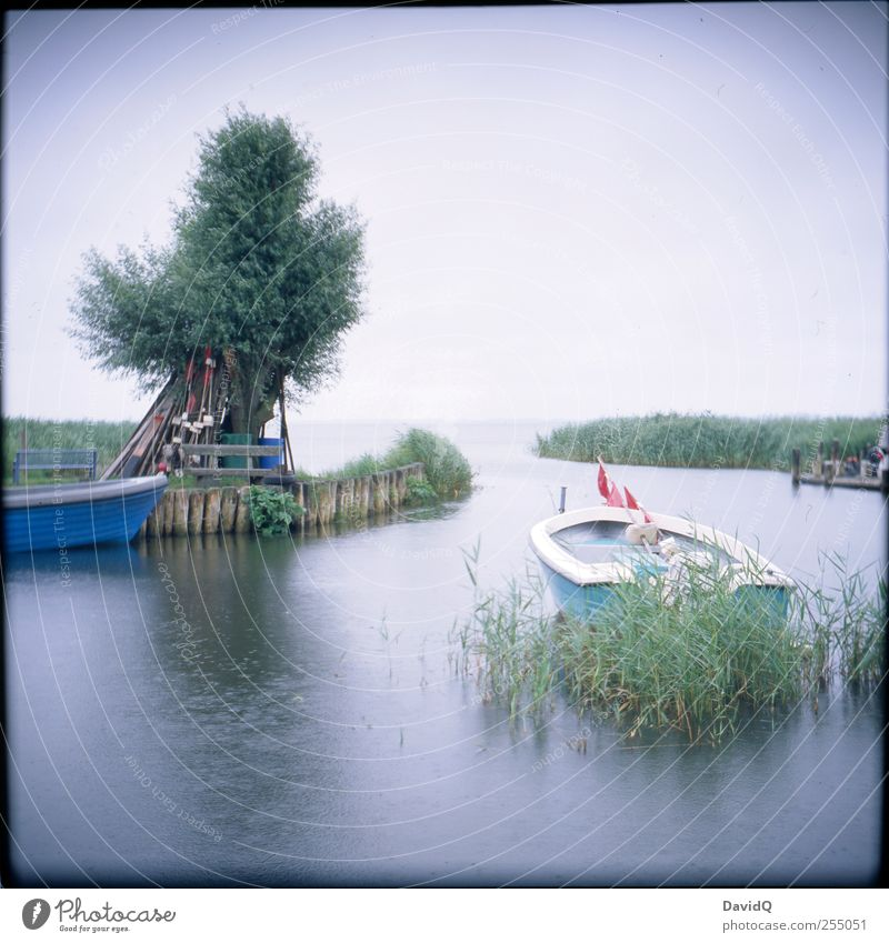 backwater Environment Nature Landscape Horizon Weather Bad weather Rain Tree Common Reed Coast Bay Baltic Sea Fishing boat Harbour Wet Idyll Mobility Tourism