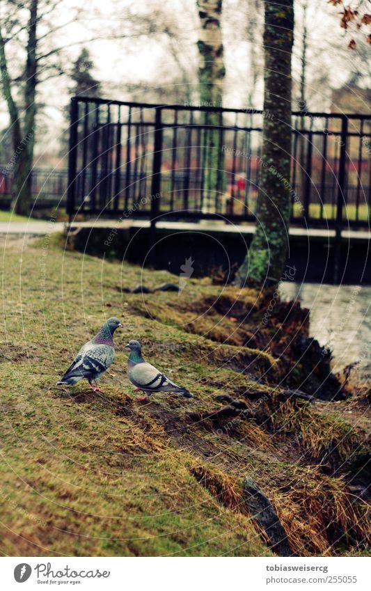 Water Animal Grass Together Bridge Moss Pigeon Brook Bad weather