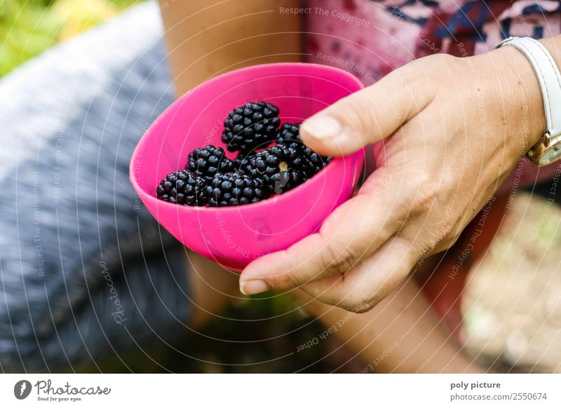 Nature Youth (Young adults) Healthy Eating Young woman Summer Hand 18 - 30 years Adults Life Autumn Family & Relations Garden Together Leisure and hobbies