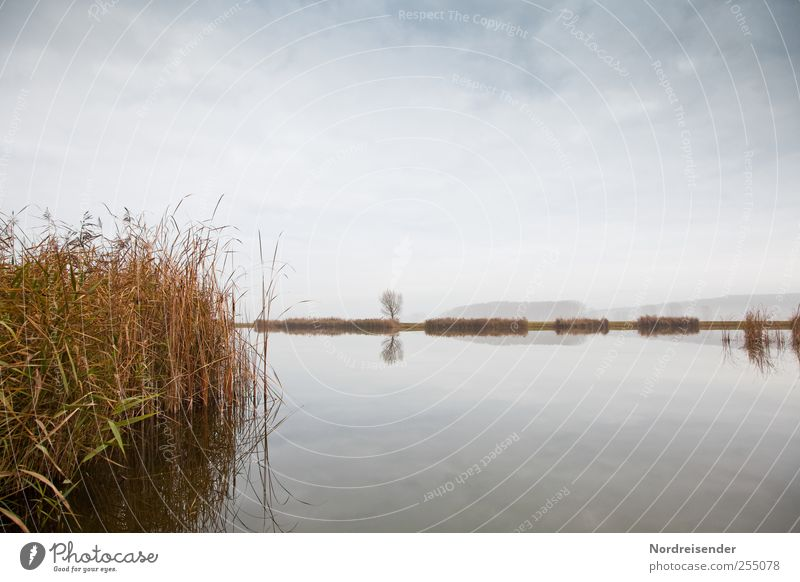 Sky Nature Water Plant Clouds Calm Far-off places Relaxation Landscape Lake Natural Transience Common Reed Meditation November Autumnal colours