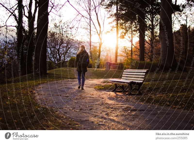 Time for me. Harmonious Well-being Contentment Senses Relaxation Calm Woman Adults 1 Human being Nature Autumn Tree Grass Leaf Going Caution Serene Boredom