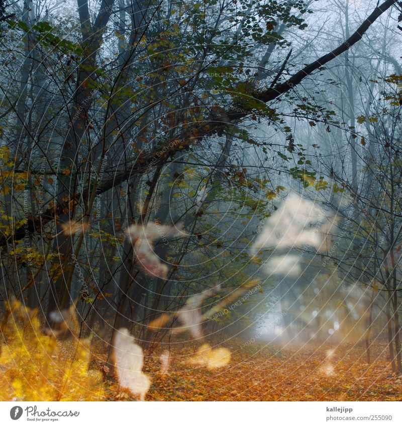 Nature Tree Plant Leaf Animal Forest Environment Landscape Air Weather Fog Climate Target To fall Footpath Eerie