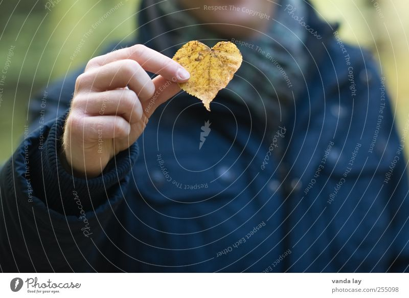 Human being Nature Man Hand Plant Leaf Adults Love Yellow Autumn Heart Romance Wellness To hold on Kitsch Indicate