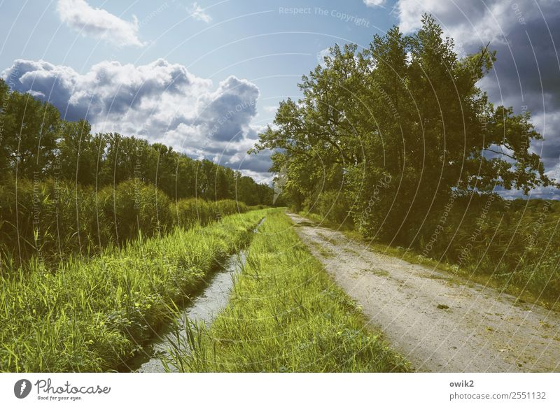 Green strip Environment Nature Landscape Plant Air Water Sky Clouds Horizon Summer Beautiful weather Tree Grass Bushes Meadow Forest Lanes & trails Idyll Direct