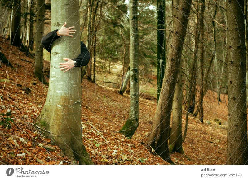 Love a tree. Human being Arm Hand 1 Nature Autumn Leaf Forest Hill Embrace Happy Safety (feeling of) Warm-heartedness Desire Emotions Contentment Colour photo