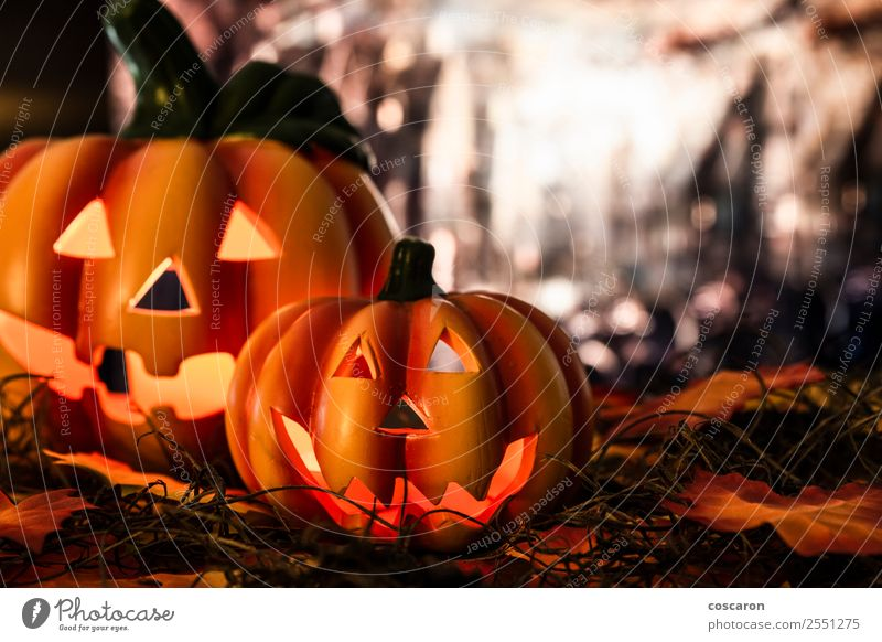 Pumpkins in a Halloween night Nature Plant Sky Moon Fog Garden Park Field Forest Decoration Candle Ornament Feasts & Celebrations Scream Sadness Authentic
