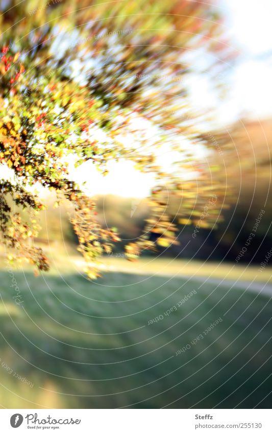 Nature Plant Green Sun Tree Leaf Landscape Environment Yellow Autumn Movement Park Dynamics Berries Autumnal October