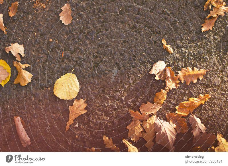 autumn Environment Nature Plant Autumn Leaf Street To fall Lie To dry up Anticipation Expectation Colour Calm Change Asphalt Floor covering Seasons Oak leaf