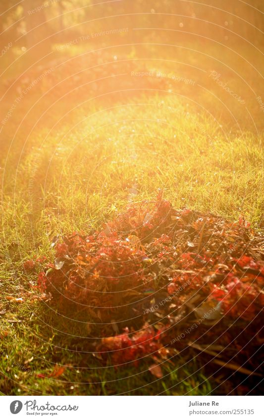 Nature Tree Plant Sun Leaf Relaxation Environment Meadow Autumn Dream Park Earth Weather Climate Growth Illuminate