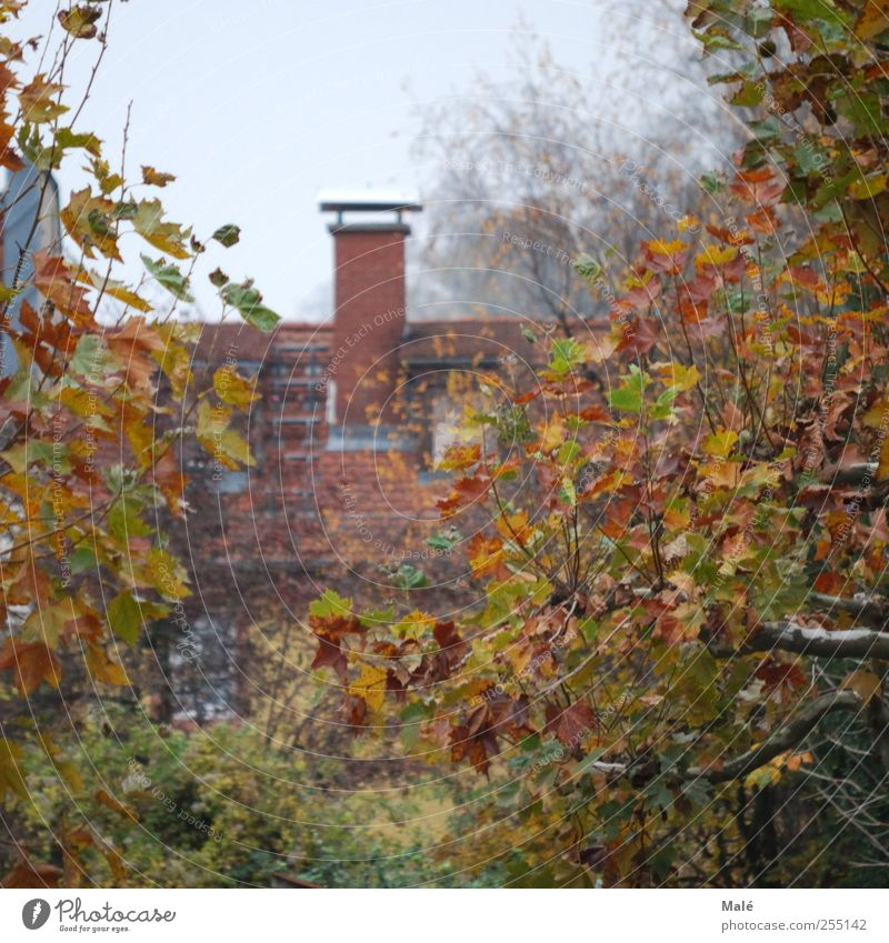Tree House (Residential Structure) Autumn Germany Fog Europe Roof Mysterious Chimney Heidelberg