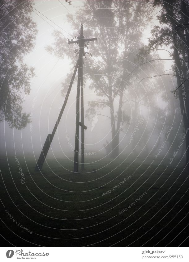 Doc #foggen Nature Autumn Field Fog Climate