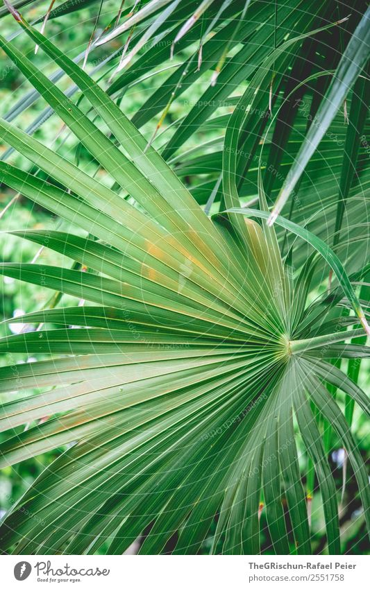 Palm leaf Nature Green Orange Palm tree Leaf Detail Macro (Extreme close-up) Nahe Plant Structures and shapes Pattern Colour photo Exterior shot Deserted Day