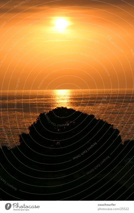 Tree Ocean Corsica West Coast
