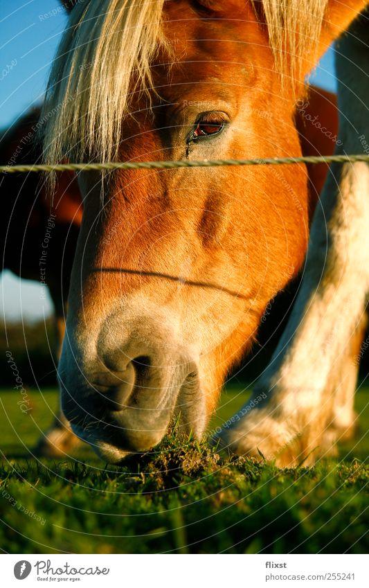 Sun Summer Animal Nutrition Grass Field Horse Animal face Beautiful weather Appetite Interest Farm animal Cloudless sky