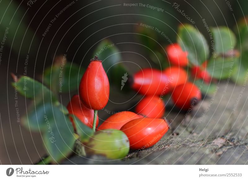 Nature Plant Green Red Leaf Forest Autumn Environment Wood Natural Brown Gray Moody Fruit Lie Growth