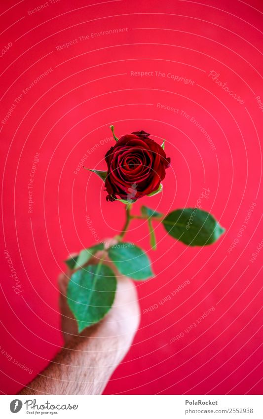 #S# Red Rose II Happy Donate Valentine's Day Love Green Give Hand Joy Spring fever Beautiful Exceptional Gift Emotions Partner Declaration of love Idea