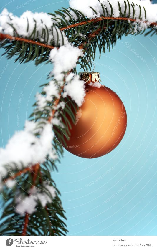Advent photo Winter Snow Fir branch Sphere Glitter Ball Kitsch Blue Green White Emotions Moody Joy Happiness Contentment Anticipation Christmas & Advent