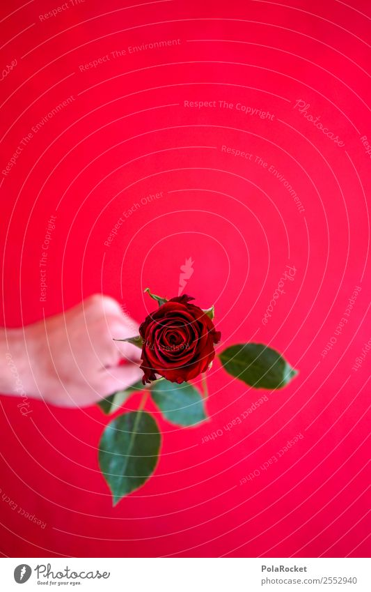 #S# Red Rose IV Happy Donate Love Declaration of love Green Valentine's Day Hand Sincere Friendship With love Symbols and metaphors Pattern Give Beautiful