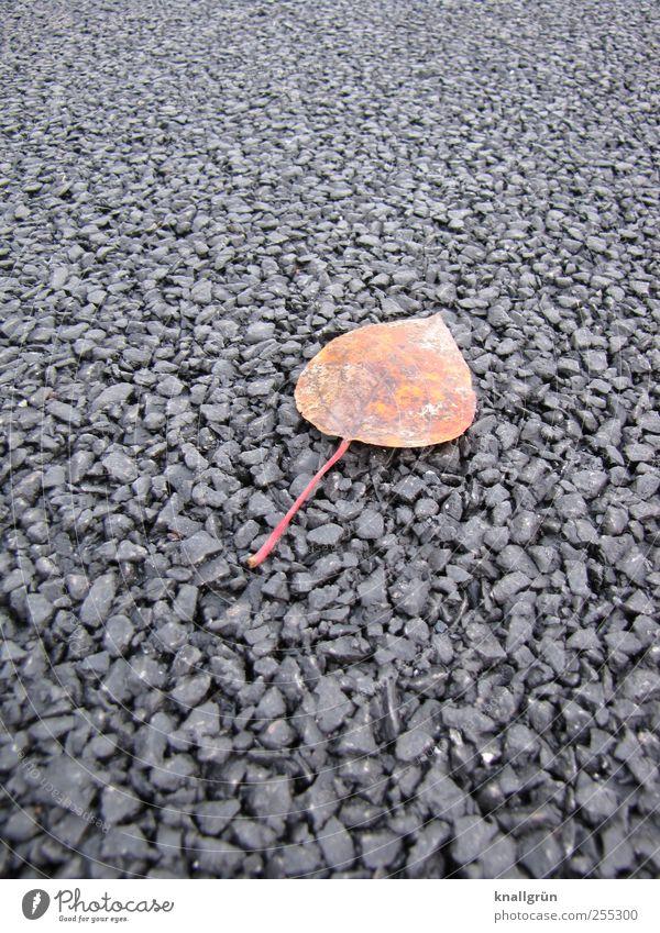 Nature Plant Leaf Loneliness Black Autumn Environment Emotions Lanes & trails Brown Lie Natural Transience End Asphalt Tar