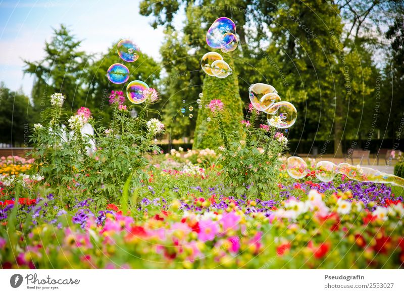 Bubbles in the park Children's game Plant Summer Beautiful weather Flower Grass Bushes Park Blossoming Glittering Illuminate Happiness Round Kitsch Ease