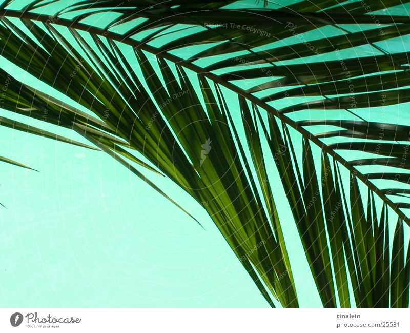 Water Beach Vacation & Travel Leaf Background picture Perspective Swimming pool Turquoise Palm tree Palm frond
