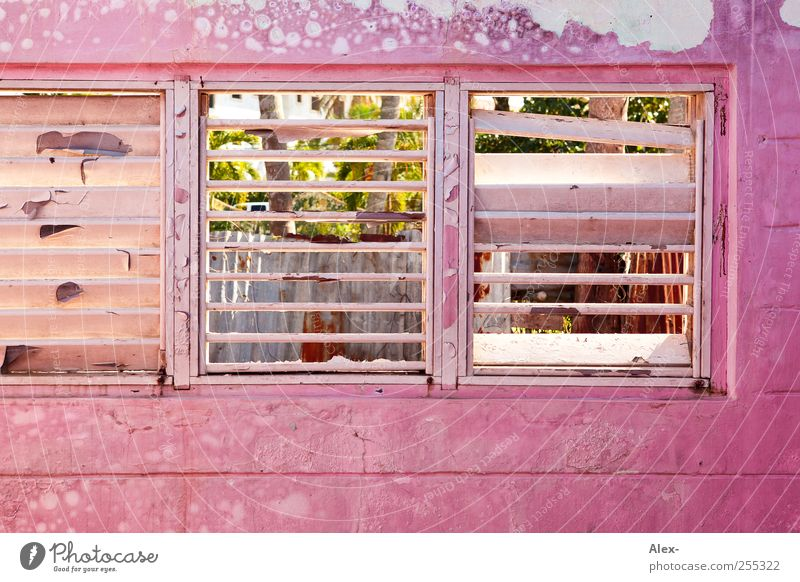 rosy prospects cabaret Dominican Republic House (Residential Structure) Hut Ruin Building Window Old Pink Esthetic Decline Colour photo Exterior shot